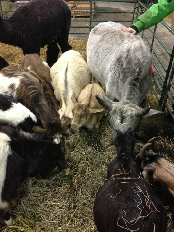 baby farm animals!